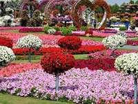 Miracle Garden Dubaiban.