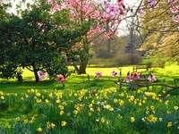 Angol park tavasszal. - Európában. Angol park tavasszal.