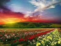 Rózsa-völgy - Rózsa-völgy Bulgáriában.