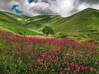 Virágok a hegyekben. - Franciaországban. Savoie. Virágok a hegyekben.