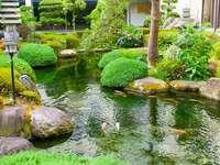 Pool. - Garden landscape: a pond.