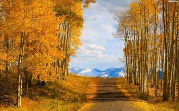 Road to the mountains. - Autumn vibes. Beautiful birches.
