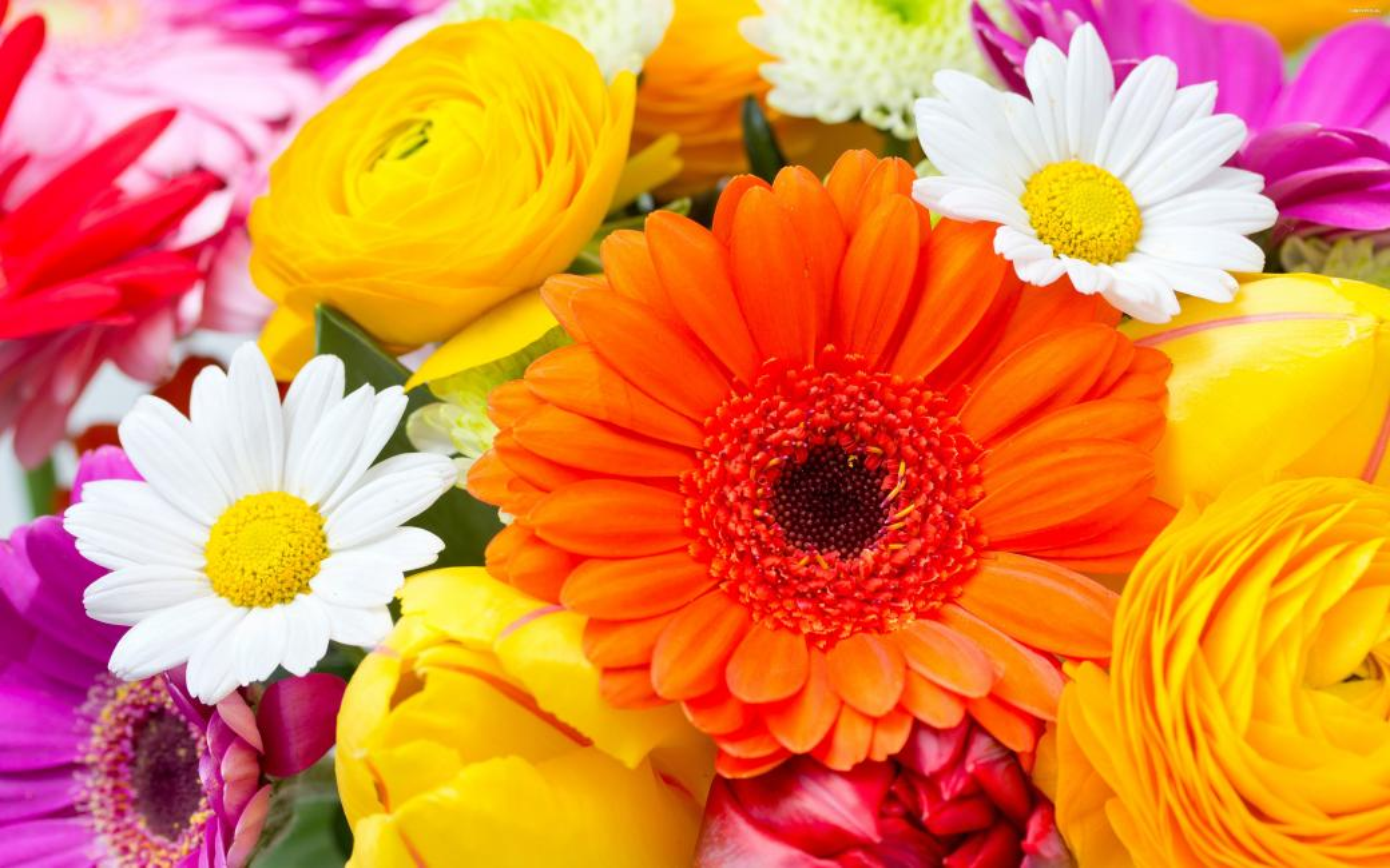 Kolorowe kwiaty - Kolorowy bukiet kwiatów wiosennych (8×8)