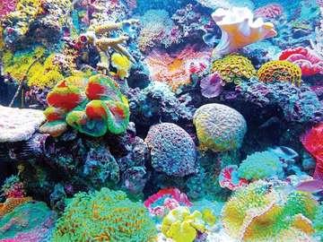 Rafa koralowa. - Życie na rafie koralowej.