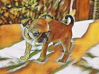 chihuahua en peinture