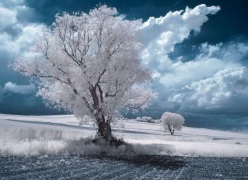 Winter landscape - A solitary tree in a wonderful winter frost