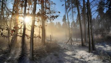 """Misty morning in the forest - A wonderful, misty morning in a forest covered with snow. The photo comes from the """"Tapeciarnia"""