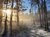 Dimineata ceata in padure