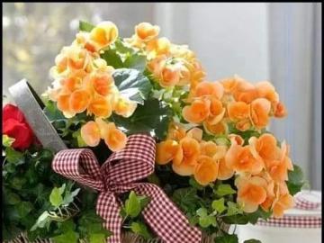 kwiatyróżowe - puzzle do ułożenia i do łamigłówki