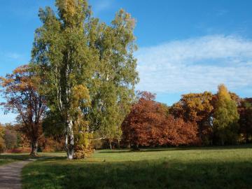 Kolory jesieni - Piękna złota jesień