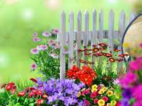 Цветя в градината. - Градински цветя до бялата ограда.