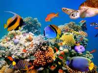 Oceaniczny krajobraz.