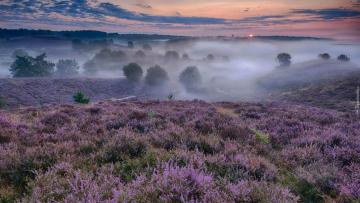 """Heather horizon in the fog - The photo comes from the \ """"Tapeciarnia \"""""""