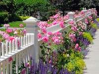 kerítés rózsákkal
