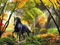 W lesie o poranku - Czarny mustang. Czarny koń. Krajobraz: w lesie o poranku. Zwierzęta. Czarny mustang. Zwierzęca uk