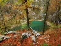 Едно малко езеро в гората.