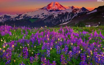 """mountain meadow - The photo comes from the site """"widoczki.com"""""""