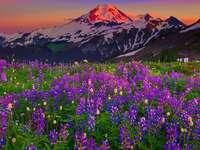 Планинска поляна