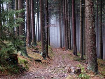 Nella foresta di Żywieckie. - Paesaggio: nella foresta di Żywieckie.