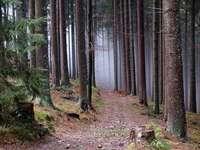 Dans la forêt de wywieckie. - Paysage: dans la forêt de wywieckie.