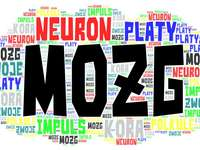 Cerveau avec puzzlefactory - cerveau, neurone et quelques autres choses