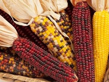 Kukurydza. - Jedzenie: kolorowa kukurydza.