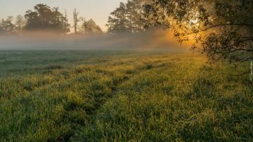 """Morning in the meadow - The photo comes from the \ """"Tapeciarnia \"""""""