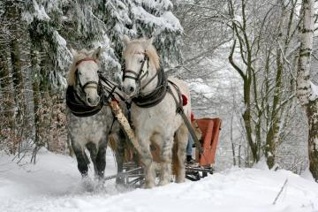 Zig chase. - How I love sleigh ride! In particular, riding on the last sledge. Who has experienced, knows. And wh