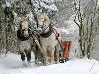 Zimní jízda na saních
