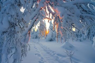 Winter in the forest. - Here it is simply a fairy tale. As far as the mouth opens, I am delighted. Just for a walk.
