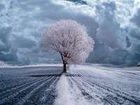 Magiczna zima w Polsce.