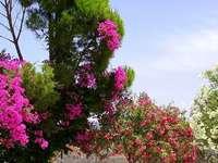 Virágzó fák Krétán.