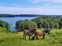 Koně u jezera.
