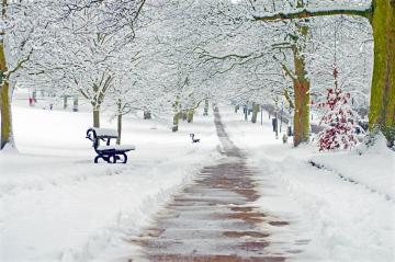 Winter in the park. - It would be nice to such a snow-covered park to go for a lunch after Christmas holiday.