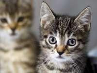 babiekatze - joli bébé chat avec ses frères et sœurs