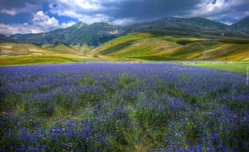 """Blue meadow - The photo comes from the \ """"Tapeciarnia \"""""""