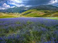 Синя поляна