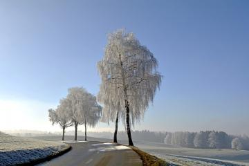 Frozen trees. - Beautiful picture. It reflects the mood and climate of winter. He is so dignified.
