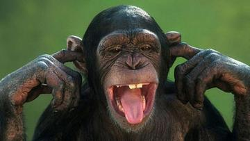 Cheerful monkey - Monkeys are divided into those from the old world (Asia and Africa) and from the new world (South Am