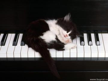 babykatze - γατάκι στο πιάνο