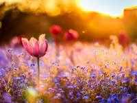 Meadow of my dreams