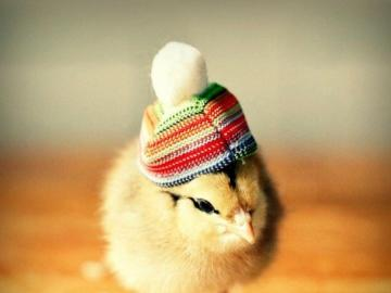 chick with hat - sweet chick with a hat
