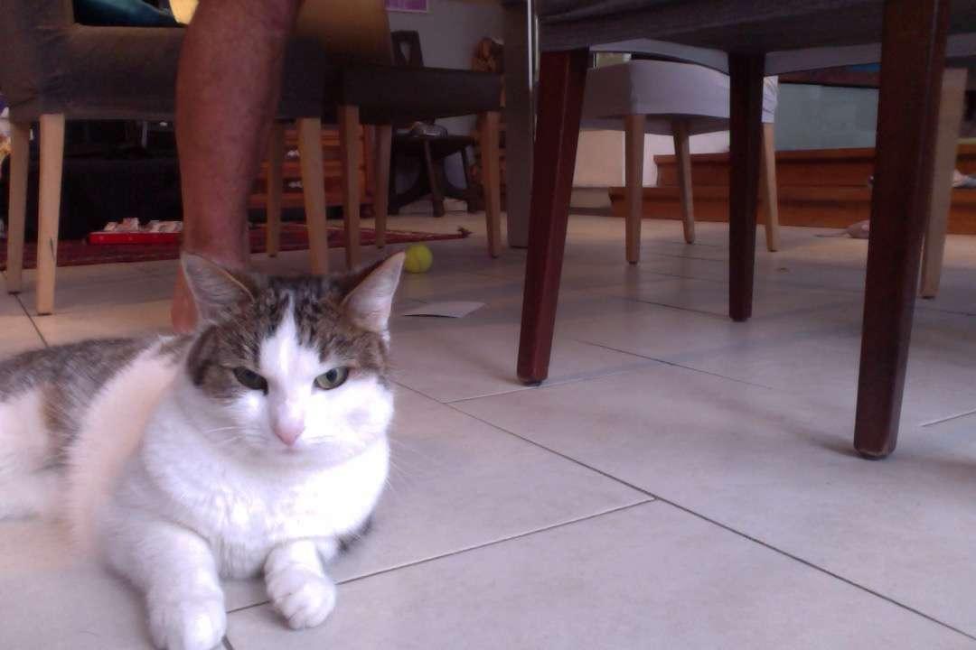 MI GATO - Mi gato está tirado en el suelo timi lina (2×3)
