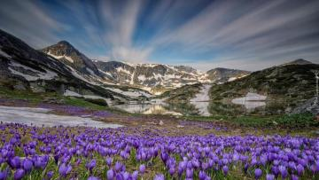 """Crocuses over a mountain lake - The photo comes from the \ """"Tapeciarnia \"""""""