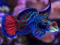 Kolorowa ryba