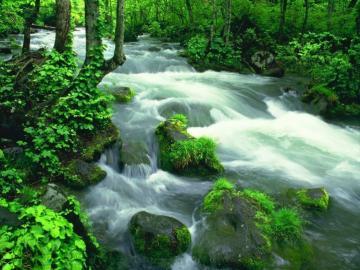 taki sobie strumyczek - rzeka, strumyk, las, kamienie, zielen