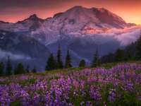 """Lupine meadow in the mountains - The photo comes from the \ """"Tapeciarnia \"""""""