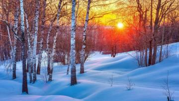 """Birch forest in the winter - The photo comes from the \ """"Tapeciarnia \"""""""