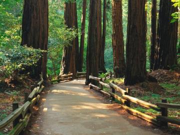 cesta lesem - cesta lesem, krajina
