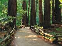sentiero attraverso la foresta - sentiero attraverso la foresta, il paesaggio